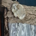 White Christmas Wall Hanging Seaglass Shell Feathers Reindeer Driftwood Beach