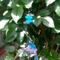 Beaded Hummingbird Sun-catcher
