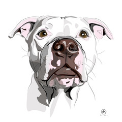 Pet HEAD Portrait -Cel/soft shaded- Colour