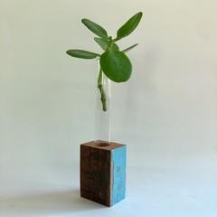 Propagation Vase - Single tube
