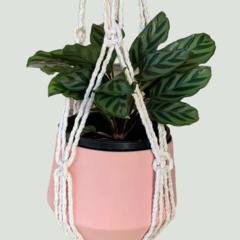 Golden natural macrame plant hanger