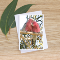 Galahs - a love story - Photographic Card #42