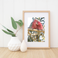 Galahs - a love story - A4 photgraphic print