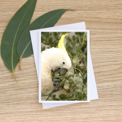 Sulphur-Crested Cockatoo Close Up -  Photographic Card #44