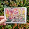 Australian Flora Christmas Card Pack