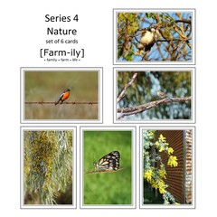Set of 6 Bird & Flora Photo Greeting Cards