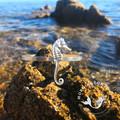 Cast Silver Seahorse Cuff