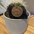 Australian Penny Keyring
