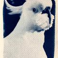 Original Cyanotype Art Print Set of Four Australian Native Animals