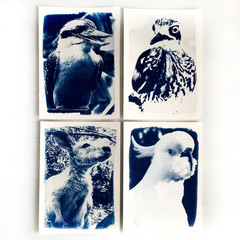 Original Cyanotype Art Print Set of Four Australian Native Animals