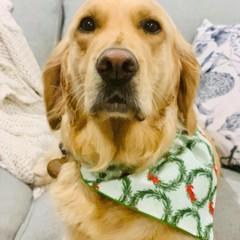 Christmas Dog Pet Bandana Size M-L Over collar design Bandanas Many Fabrics