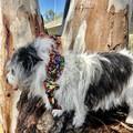 Doggy Kooka's Koolers for smaller breeds