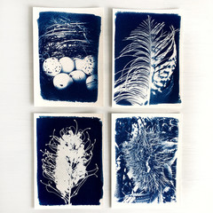 Original Cyanotypes, Set of Four Nature Prints