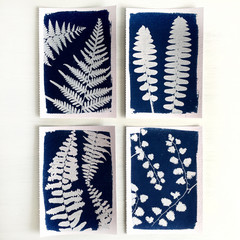 Fern Print Set of Four - Original Handmade Cyanotypes