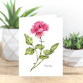 Pink Rose Botanical Illustration A6 Greeting Card Blank inside
