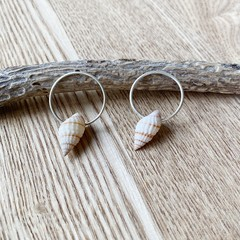 Sea shell hoop stud earrings