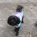 Dog Coats Size XXS Jumper Coat Flannelette and Fleece or Double Fleece