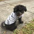 Dog Coats Size XS Jumper Coat Flannelette and Fleece and Double Fleece