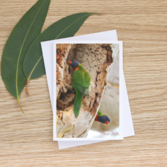 Rainbow Lorikeets Inspecting a Hollow - Photographic Card #45