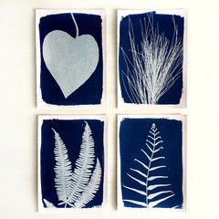 Set of Four Nature Prints, Original Handmade Cyanotypes.