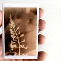 Photogram zine, artist book contains original handmade photograms