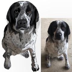 Pet Full-Body Portrait - Colour - HI DEF