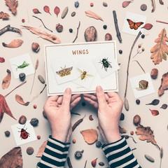 Bug Activities for Toddlers / Preschool