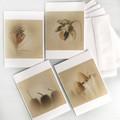 Botanical Greeting Card Set of Four