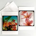 Set of Two Frangipani Flower Greeting Cards, Blank inside.