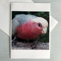 Set of 5 Greeting Cards, Australian Animal Collection, Native Birds