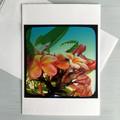 Set of Two Frangipani Flower Greeting Cards, Blank inside.
