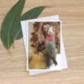 Mother and Child - Galahs - Photographic Card #48
