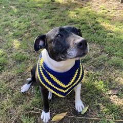 100% Cotton Crochet Dog/Cat Bandana Neck Tie, Scarf *FREE SHIPPING*