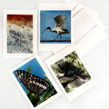 Card Pack of 4, Australian Summer Nature Set, Blank Greeting Cards and envelopes