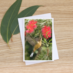 Eastern Spinebill Hovering - Photographic Card #50