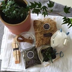 DIY Kokedama Kit | Complete with Soil & Plant