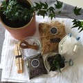DIY Kokedama Kit | Complete with Soil & Plant