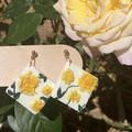 Yellow English Roses Collection - Diamond
