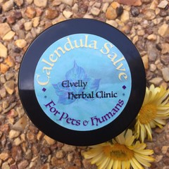 Calendula Salve for Pets & Humans