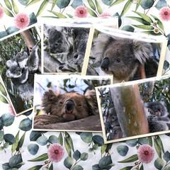 KOALAS OF TOCUMWAL NSW CARDS