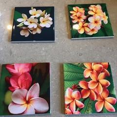Frangipani coasters, set of four