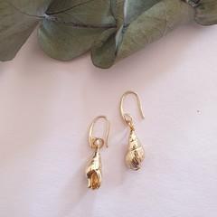 Golden Shells