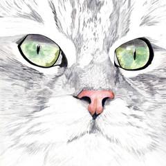 Cat Portrait Card: BARNEY