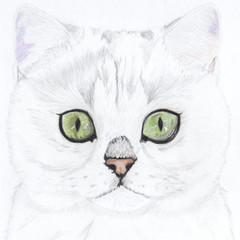 Cat Portrait Card: MUJI