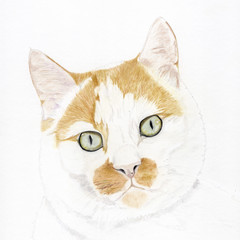 Cat Portrait Card: ALFIE