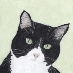 Cat Portrait Card: TC