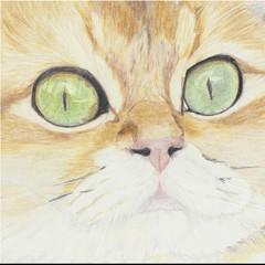 Cat Portrait Card: BUTTER BISCUIT