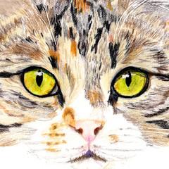 Cat Portrait Card: ROSIE