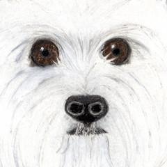 Dog Portrait Card: ISOBEL the Westie