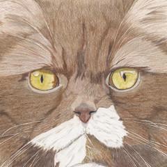 Cat Portrait Card: FLORA